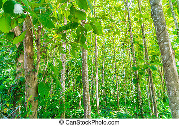 Green forest with sunlight - Green forest with sunlight