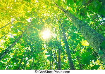 Green forest with sunlight . - Green forest with sunlight