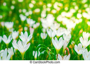 Beautiful White bunch flowers on green grass background . -...