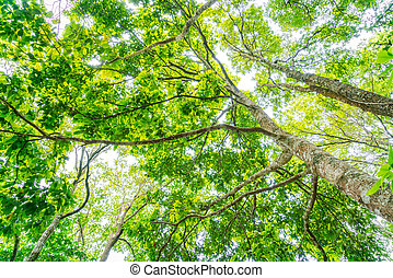 Beautiful green Forest trees . - Beautiful green Forest...
