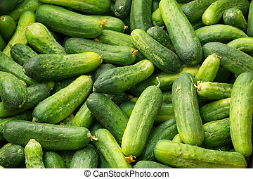 Cucumbers photographed from above