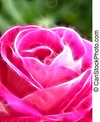 Pink rose abstract