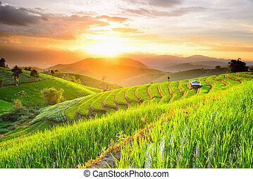 Rice Terraces with sunset backdrop at Ban Papongpieng...