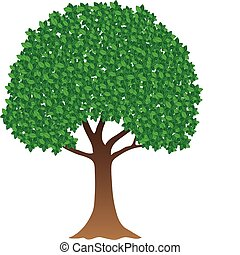Green tree - Illustration of green tree on white background