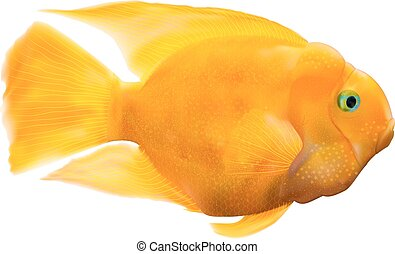 Parrot fish illustration - A realistic vector illustration...