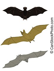 Bats - Vector illustration of a bat from different sides....