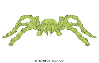 Tarantula - Vector illustration of polygonal tarantula...