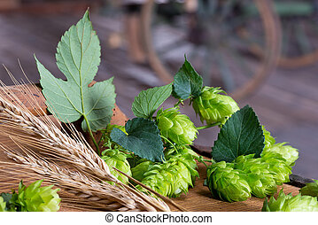 Detail of hop cones with sheaf of barley