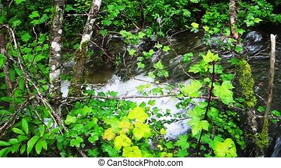 iuzhaigou 11 - stream and forest, Jiuzhaigou Valley.