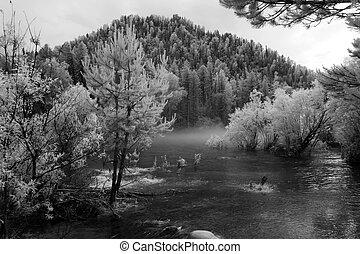 Fog at Katun river, Altai State Natural Biospheric Reserve,...