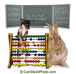 Bunny and dog first day school - cute Bunny and Chihuahua On...