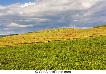 beautiful landscape with grass on a hill