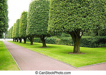 Gardens in the American cemetery - Topiary trees cast...
