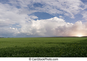 Green grass against a stormy sky and sunset.