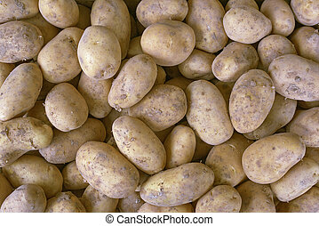 bunch of fresh new potatoes