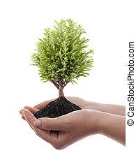 crescendo, verde, árvore, mãos
