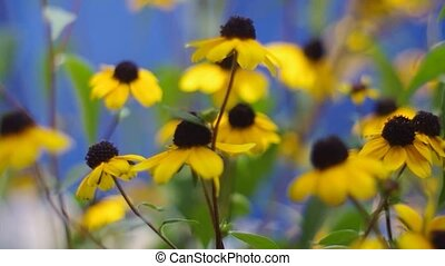 yellow daisies on a blue background