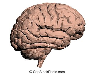 Brain - Vector illustration of a brain Polygon Isolated