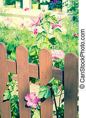 Wooden fence with mallow, hollyhock flowers