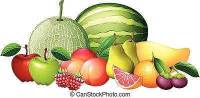 Different kinds of fresh fruit illustration