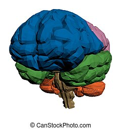 Brain - Vector illustration of a brain The parts are painted...