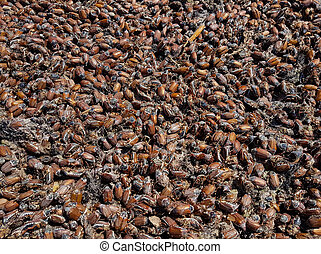 Lot of dead cockchafers. Natural disaster