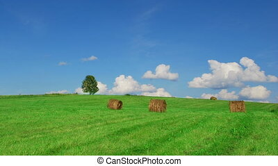 Lonely tree on field with hay bales - Time lapse shot of...