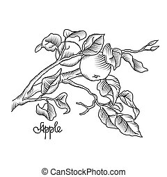 Hand drawing an apple branch. Vector illustration