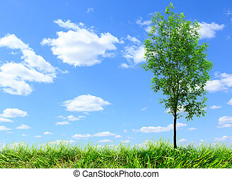 Green ash tree on blue sky background