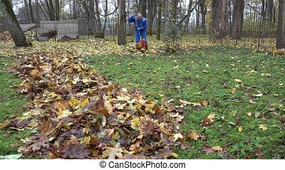 Male worker rake leaves falling from tree in backyard. 4K -...