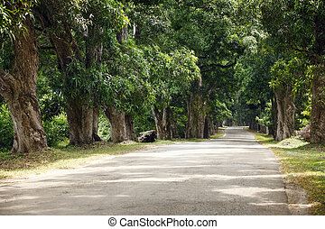 Road in forest in daytime with nobody Zanzibar, Africa