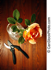 Beautiful rose and scissors on the wooden background