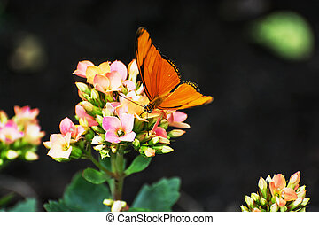 Beautiful orange butterfly pollinating small pink and yellow...