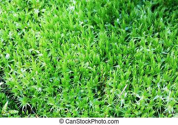 forest green moss background - The green forest moss...