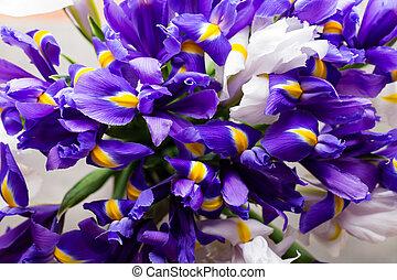 Iris flowers background, spring floral patern.