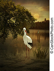 River landscape at sunset - Crane standing in the river...