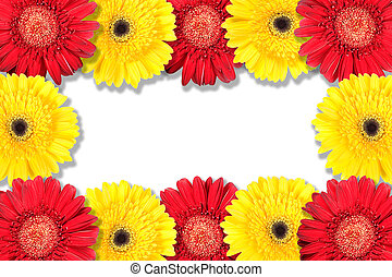 Abstract frame with yellow and red flowers. Close-up. Studio...