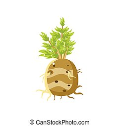 Fresh Turnip Primitive Realistic Illustration. Flat Bright...