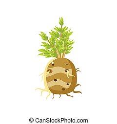 Fresh Turnip Primitive Realistic Illustration Flat Bright...
