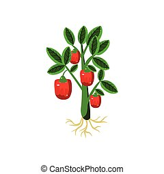 Fresh Sweet Pepper Primitive Realistic Illustration. Flat...