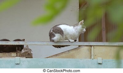 cat sitting on an iron girder slow motion video - white cat...