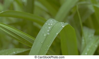 closeup of leaf with drops of slow motion video - closeup of...