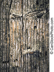old gnarled spruce boards - abstract background or texture...