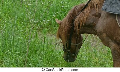 closeup of a horse eating grass slowmotion video - the rain...