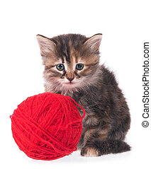 Cute siberian kitten with balls of color threads on white...