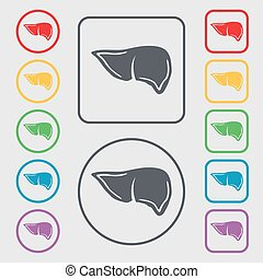 Liver icon sign. symbol on the Round and square buttons with...