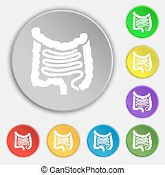 Intestines icon sign Symbol on eight flat buttons Vector...