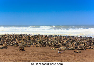 Cape fur seal group at the beach Cape Cross - Cape fur seal...
