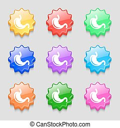 Stomach icon sign symbol on nine wavy colourful buttons...