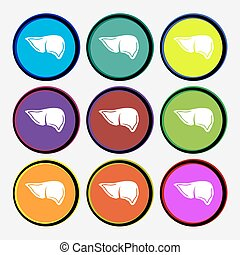 Liver icon sign. Nine multi colored round buttons. Vector...